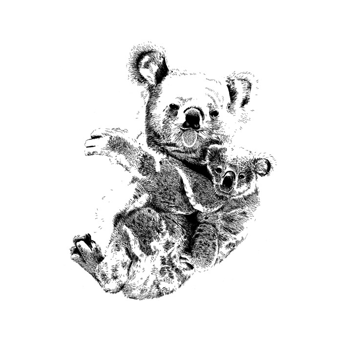 Line Drawing Koala : Animal drawings emilywallis