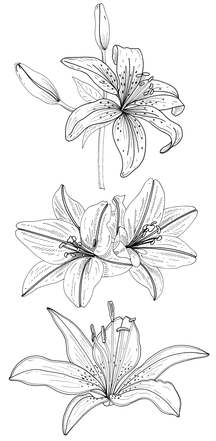 Flower illustrations for rubber stamps