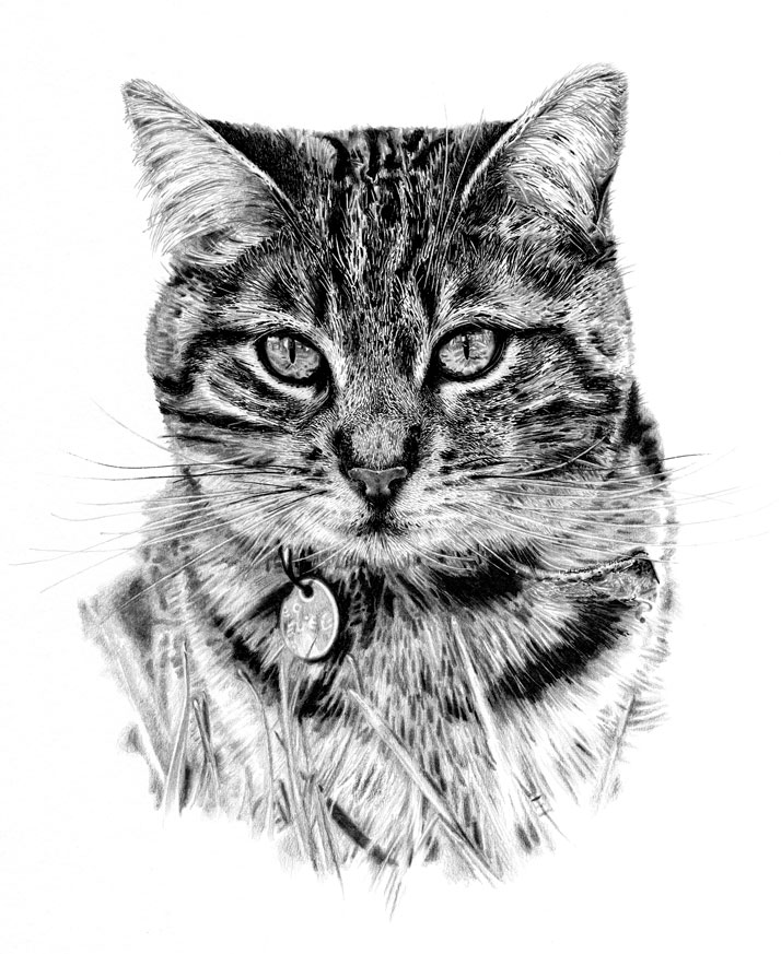 Cat illustration of Lilly