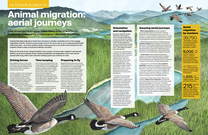 Outdoor Photography Aerial Migration Illustration