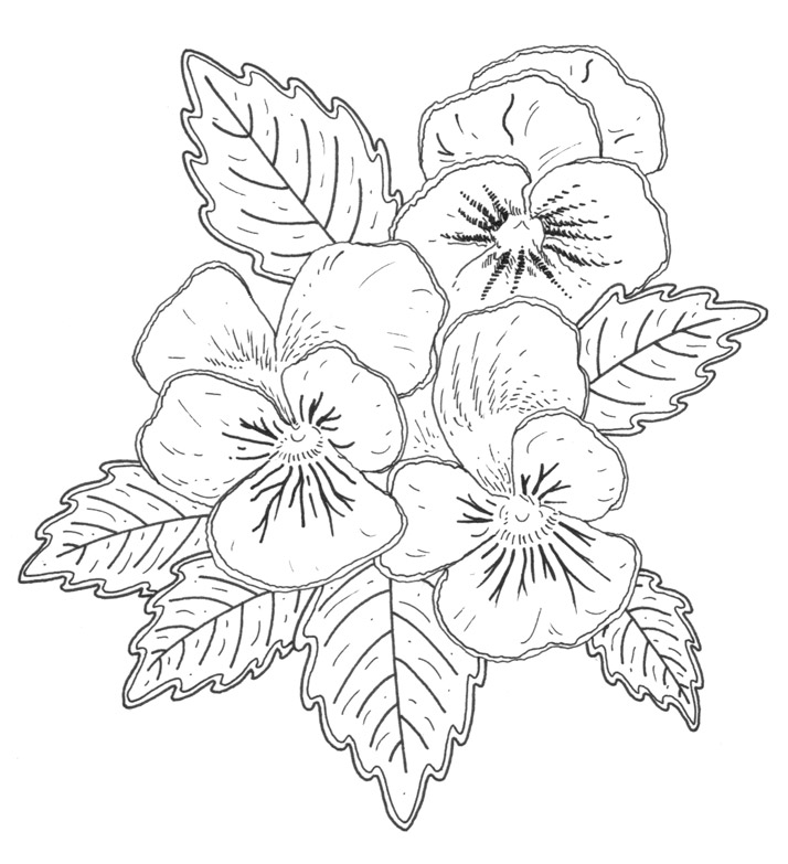 pansy flower drawing - photo #17
