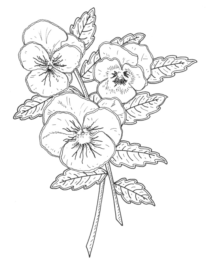 Illustration of a pansy for rubber stamp