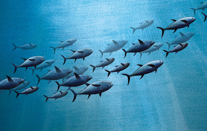 Emily Wallis Underwater Journeys Illustration Blue Fin Tuna