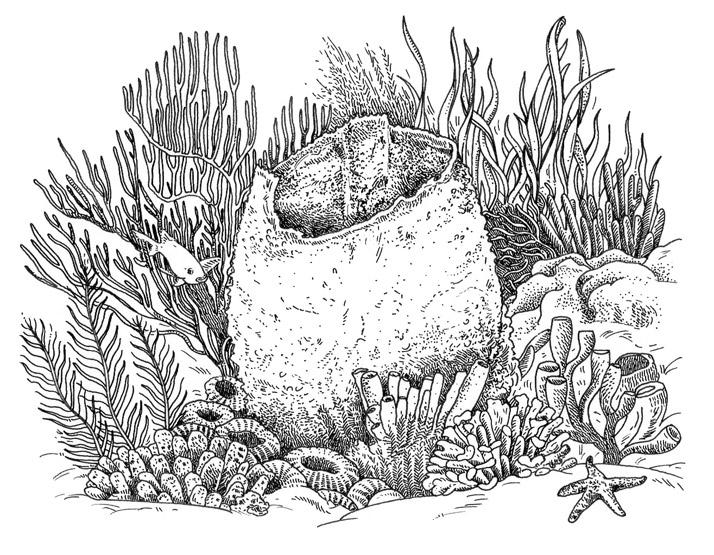 Barrel sponge for atlanta magazine by emily wallis