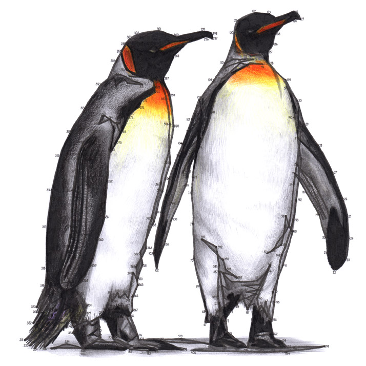 Penguin Dot-to-dot