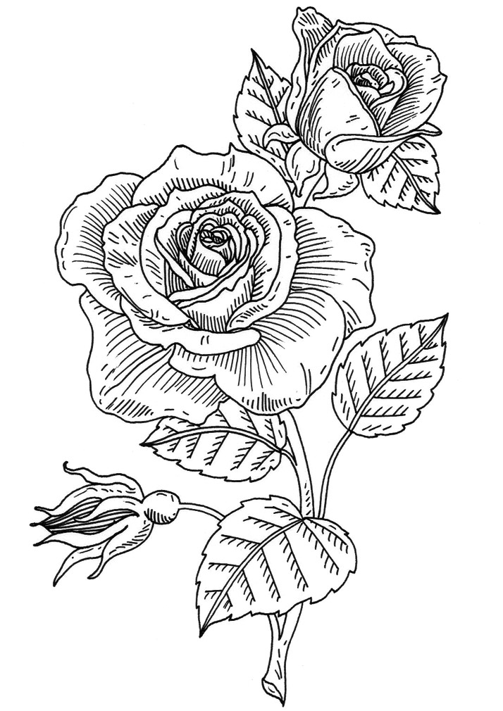 Emily Wallis Illustration, flower rubber stamp design for penny black inc.