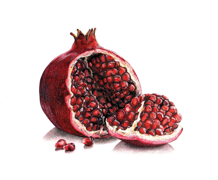 Pomegranate illustration emily wallis