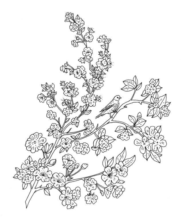 Bird with Apple Blossom Illustration