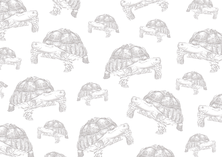 Tortoise endpaper for Aesop's fables illustrated book