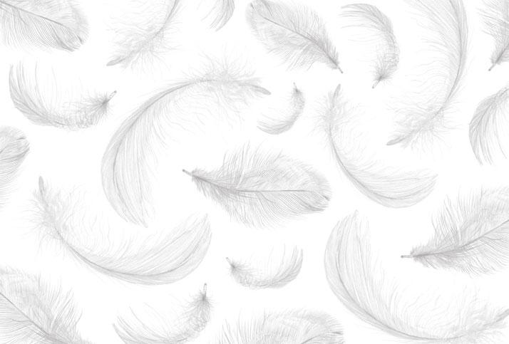 Illustration of feathers