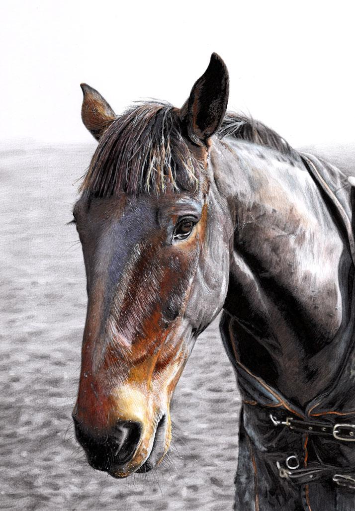 Equine artist horse illustration