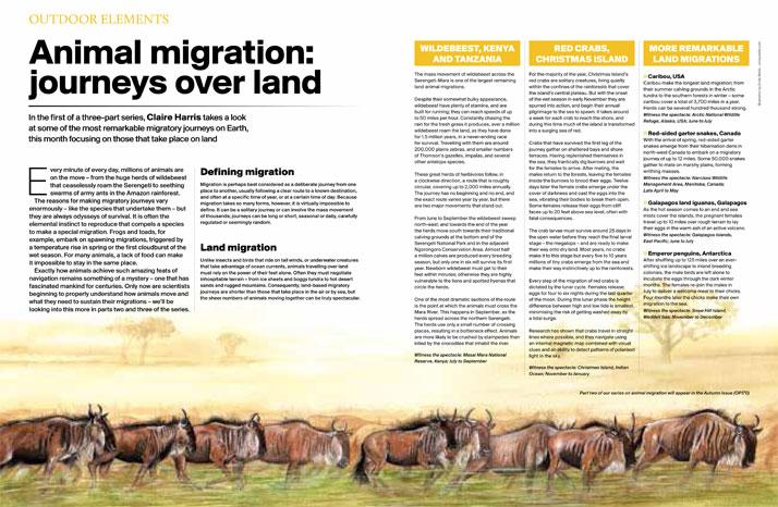 Wildebeest painting for magazine