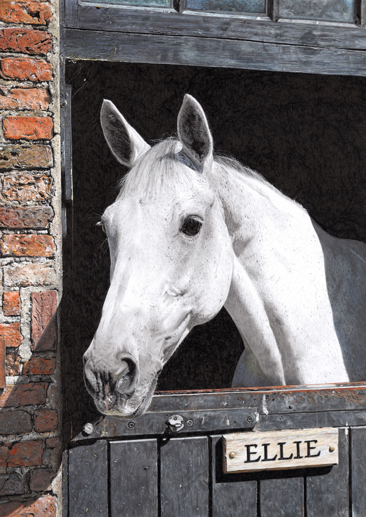 Equine portrait of a horses head in a stable by Emily Wallis