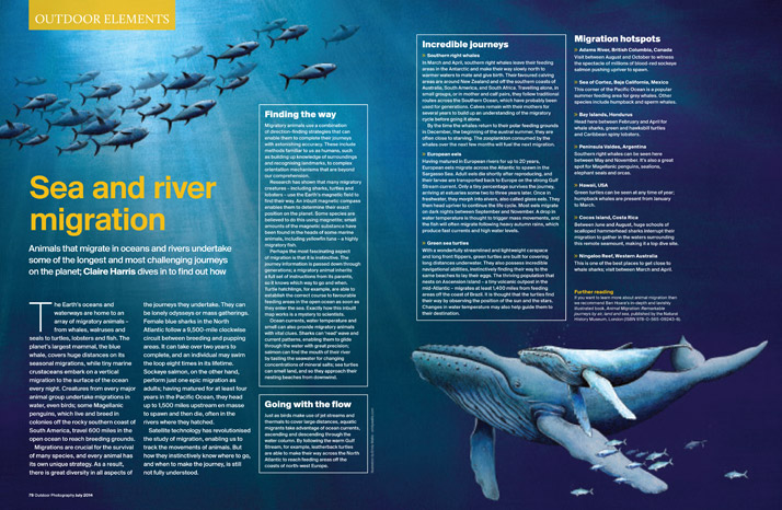 Emily-Wallis-Illustration-for-Outdoor-Photography-Magazine-Sea-Migration