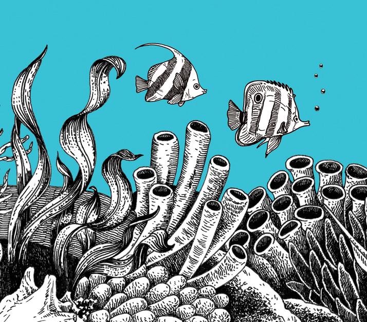 Fish Close up  - a Sea Voyage dot to dot
