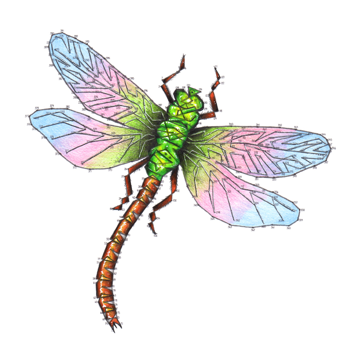 Dragonfly dot to dot colouring in