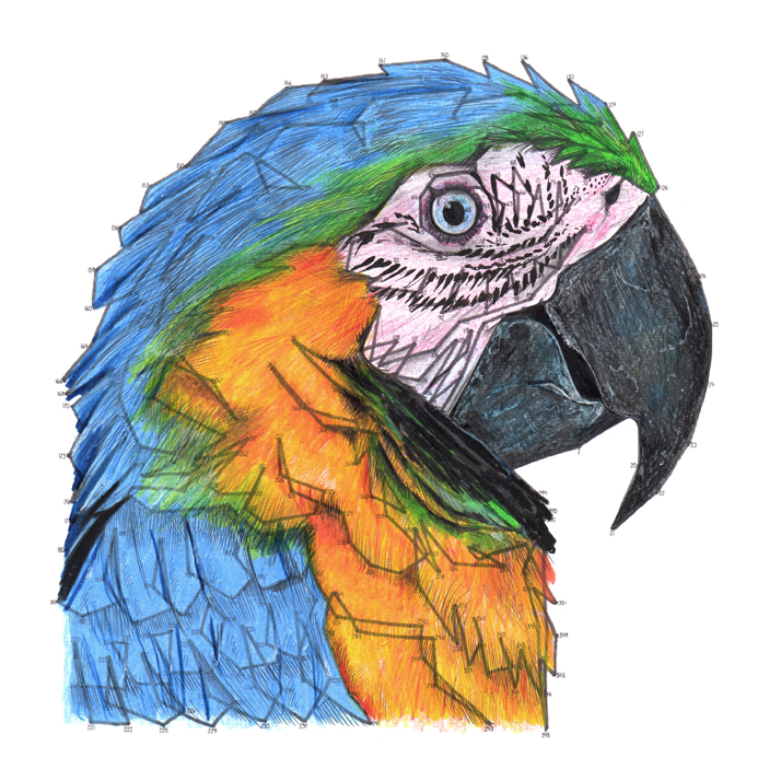 Parrot Dot to Dot colouring in