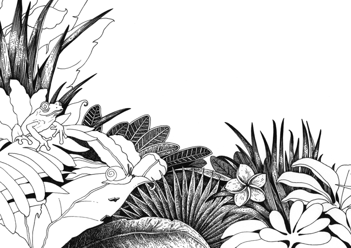 A Journey Through the Jungle, Dot-to-dot Book for adults
